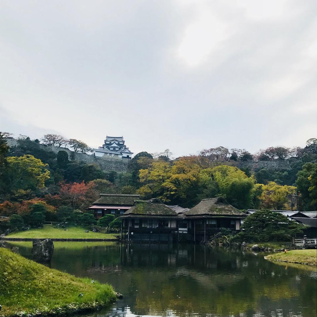 名勝玄宮園。風景。 彦根城をバックに美しく庭園を見ることができる。...