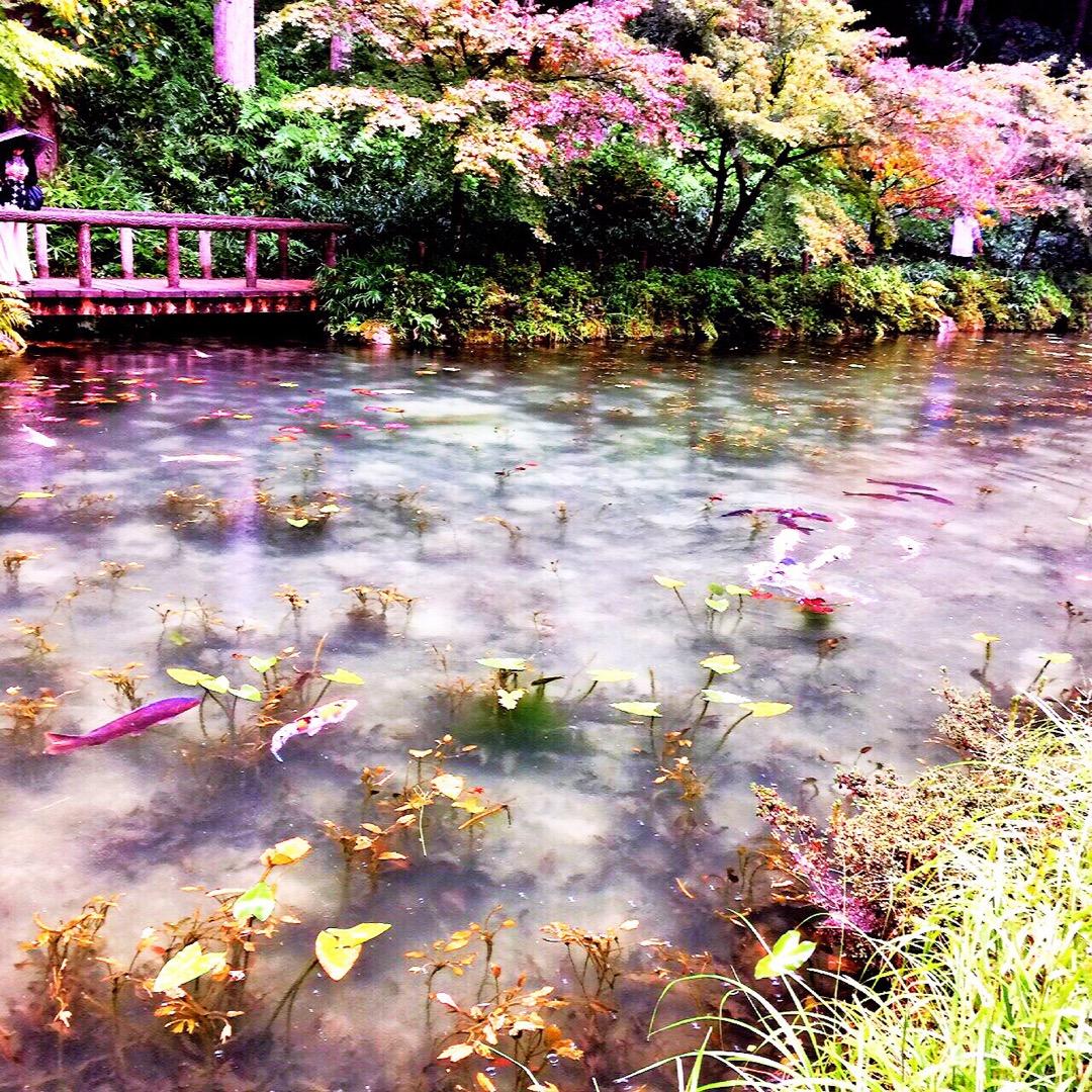 ★ 岐阜県にある名もなき池 通称モネの池♡ 生憎のお天気でしたが ...