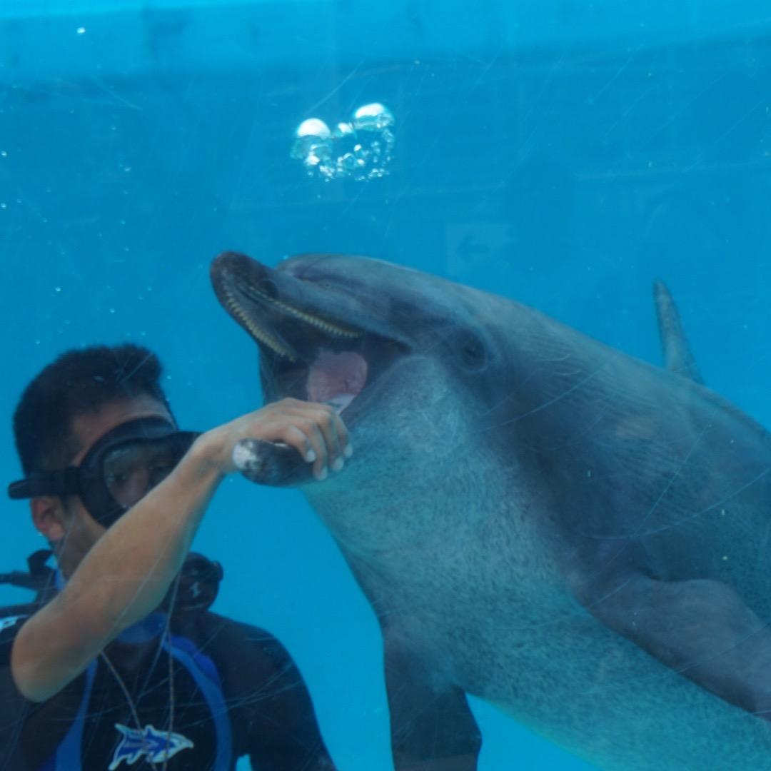 イルカのダイビングショーです。 こちらはイルカの歯のしくみを説明し...