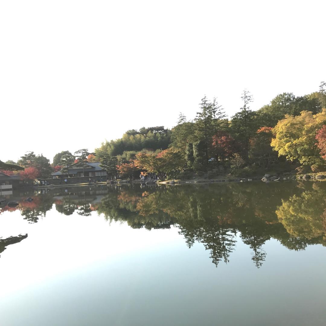 立川市の昭和記念公園に行ってきました。日本庭園は紅葉も見頃を迎えて...