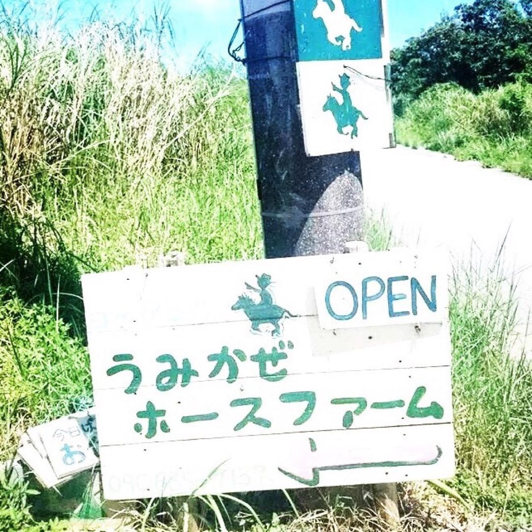 海の中を一緒にお散歩してくれるお馬さん達がいる牧場🐴  #沖縄 #...