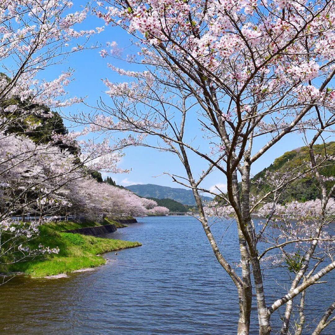 庭木ダム  本当に素敵な場所ですよ! 散歩がてら花見💓 堪能しまし...