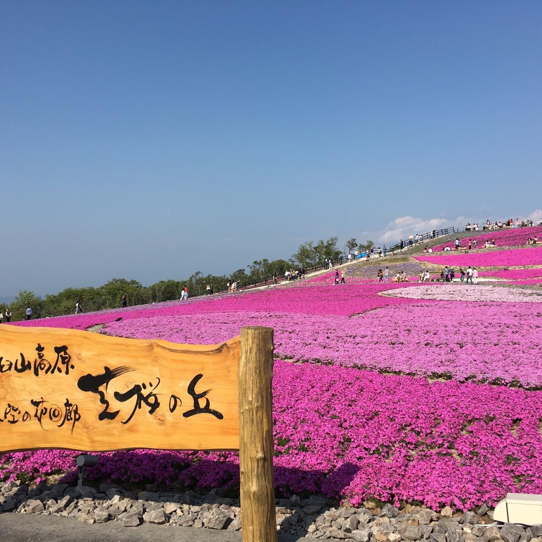 茶臼山高原の芝桜を見に行った時の写真( *´艸`) 結構満開で人も...