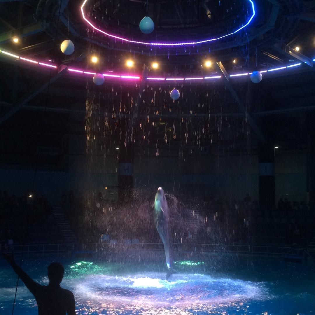 エプソン品川アクアスタジアムのイルカショーの写真です。 イルカに見...