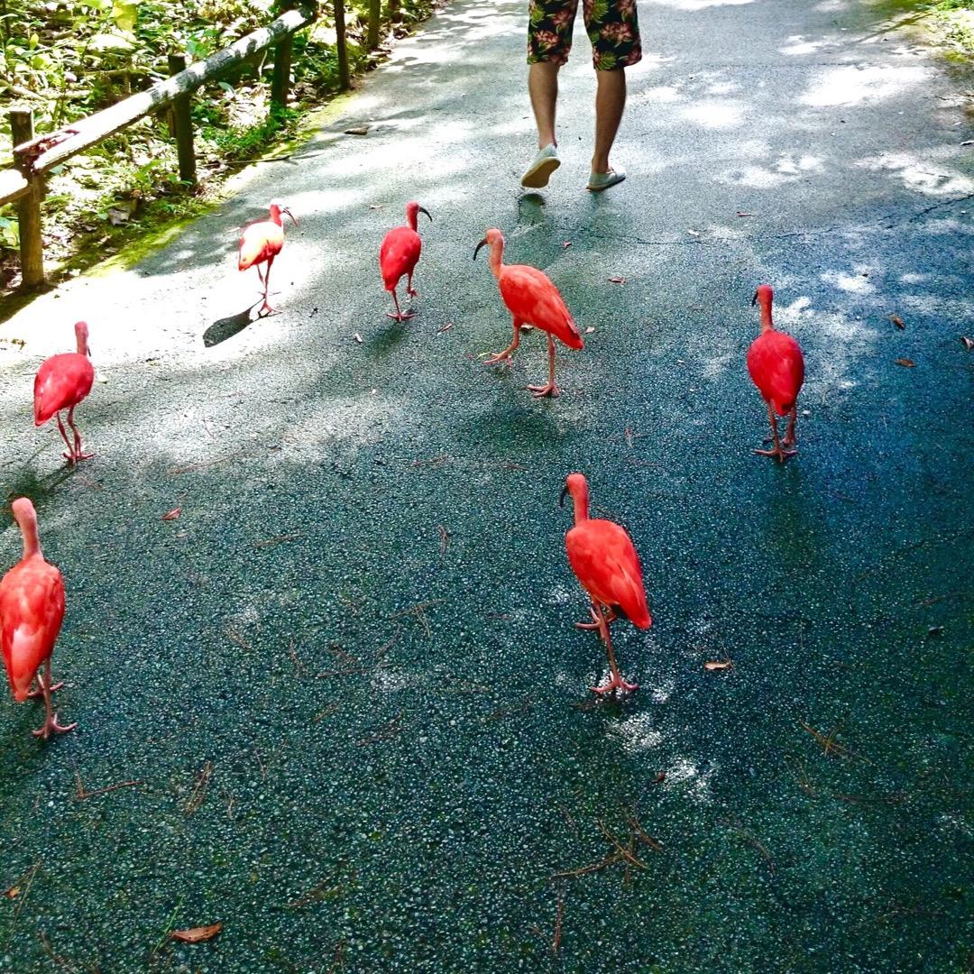 振り返れば、跡をついて来る可愛い鳥達(笑)🐦  #沖縄 #ネオパー...