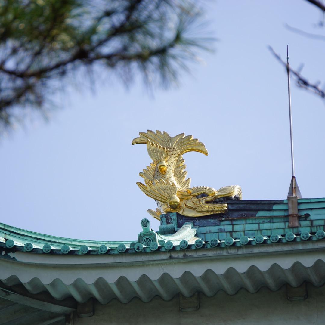 名古屋城と言ったら金の鯱鉾。ズームアップして見ました。キンキラキン...