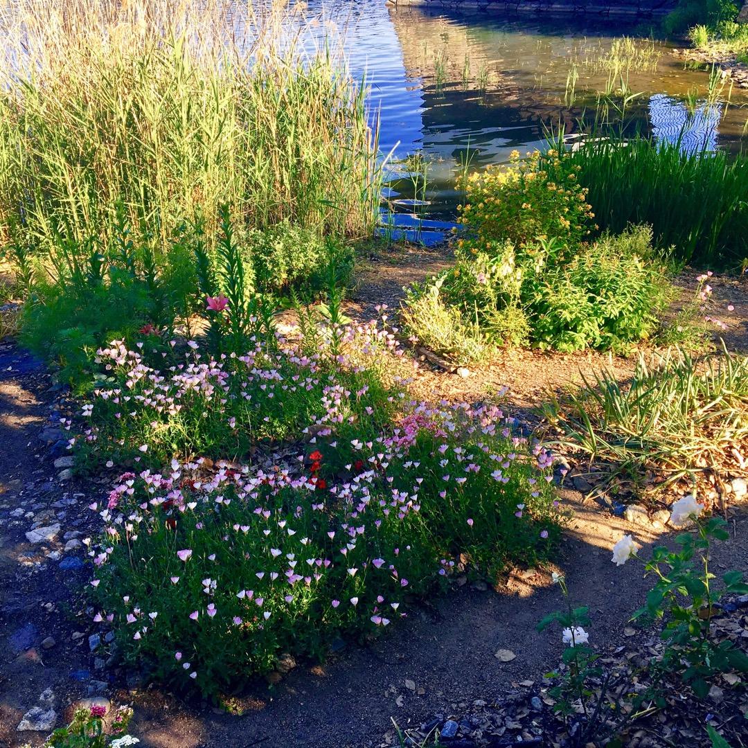 桜の名所としても有名なスポットですが、桜の時期でなくても湖畔にたく...