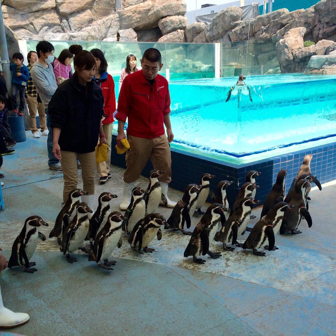 鳥羽水族館では、定番のイルカショーのような大規模なショー以外にも、...