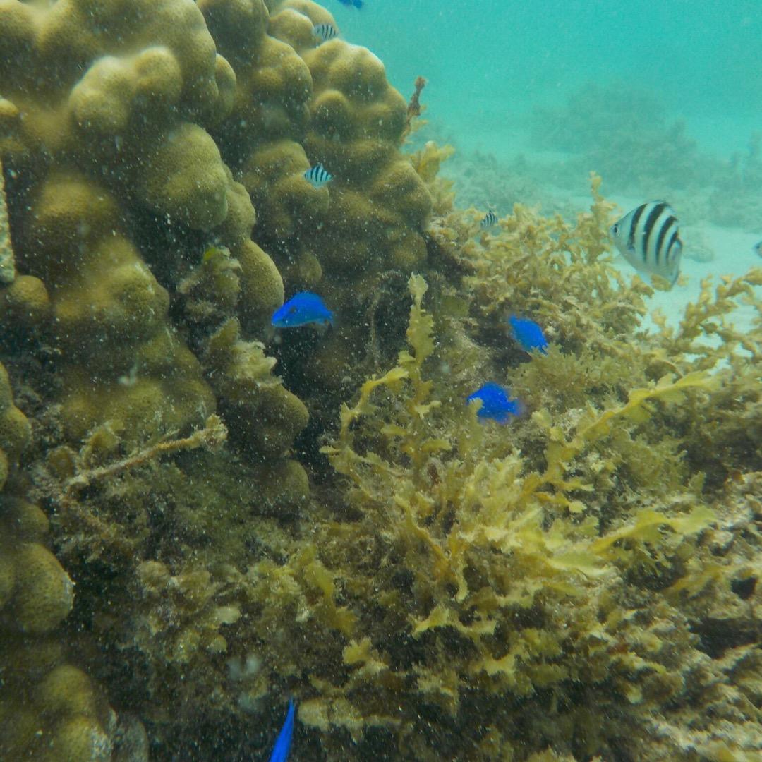 米原ビーチへ。浅瀬にもたくさんのお魚が泳いでる〜!  #米原ビーチ...
