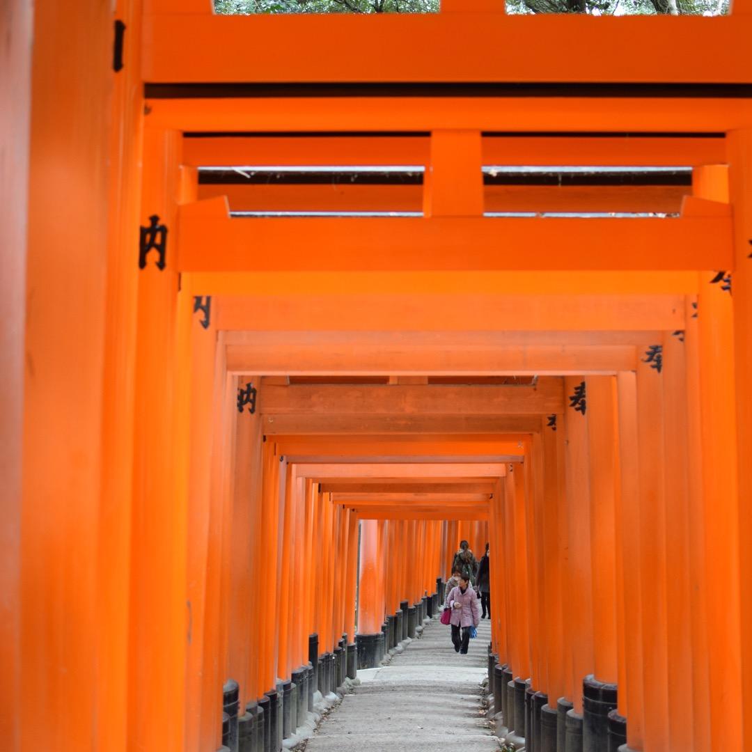 京都に一人旅に行った時、一度生で見てみたかったこの景色。  「伏見...
