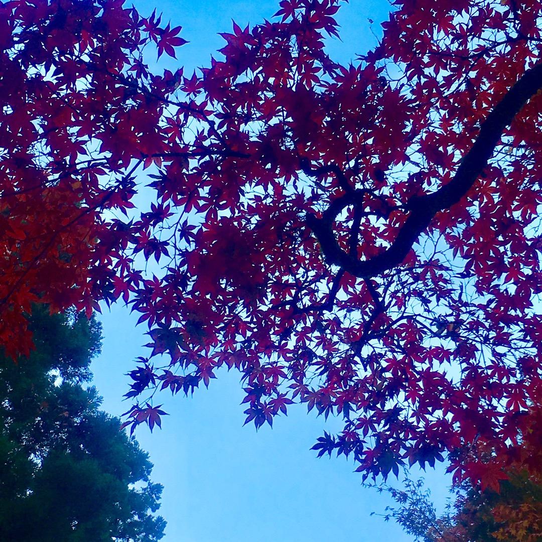 日光東照宮の紅葉綺麗だった🍁