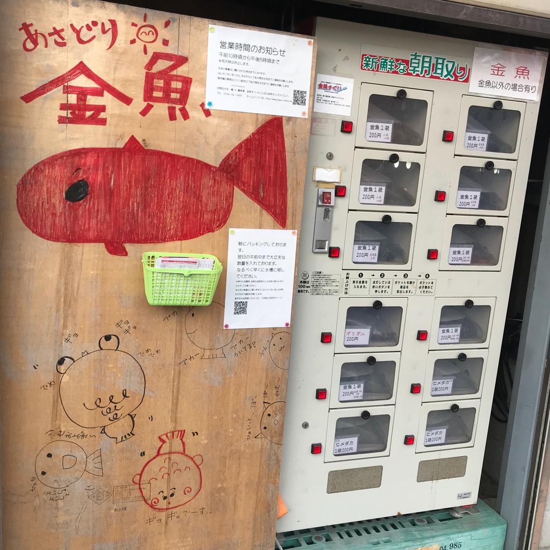 金魚の自動販売機。 な、なんと自販機マニアもびっくりな金魚の自販機...
