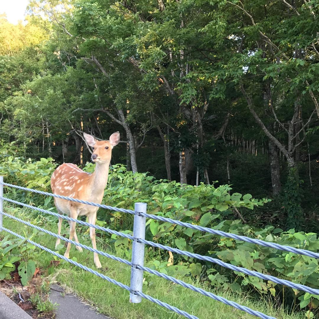 北海道知床の知床五湖では動物を見ることができませんでしたが 知床五...