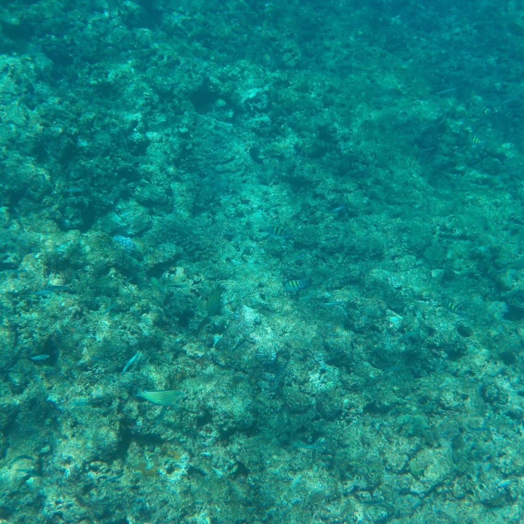 石垣島〜幻の島〜パナリ島でシュノーケリング。半日ツアーの予定が、楽...