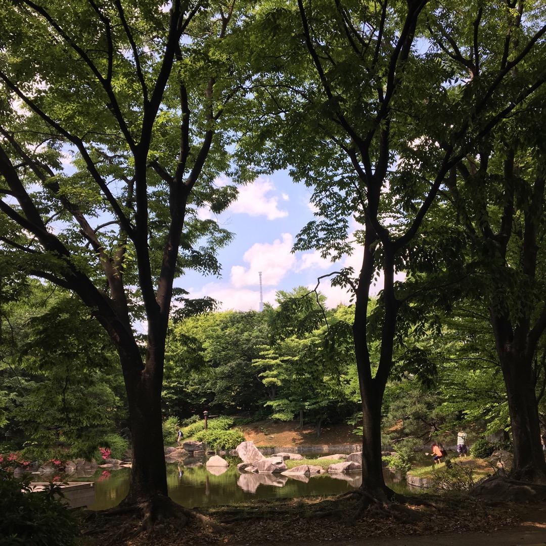 たくさんの緑に囲まれて池を眺めていると、木々の緑からの隙間に青空が...