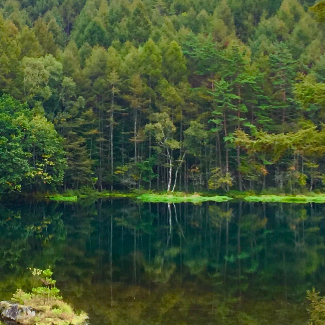 東山魁夷さんの絵画『緑響く』で有名になった御射鹿池🦌 水面に映る木...