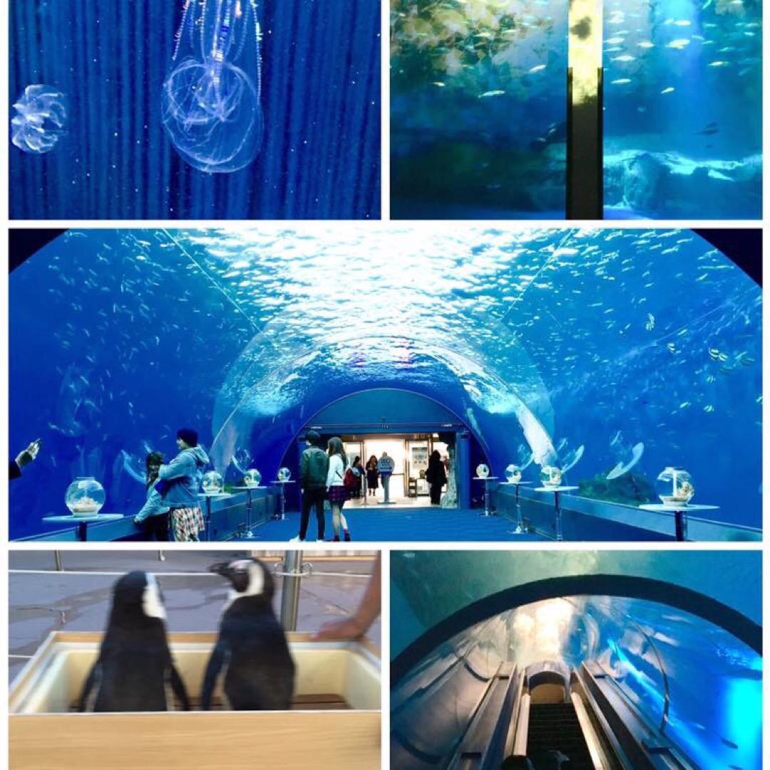 八景島シーパラダイス⛵️ 念願のトンネル水槽🐬  ペンギンのショー...