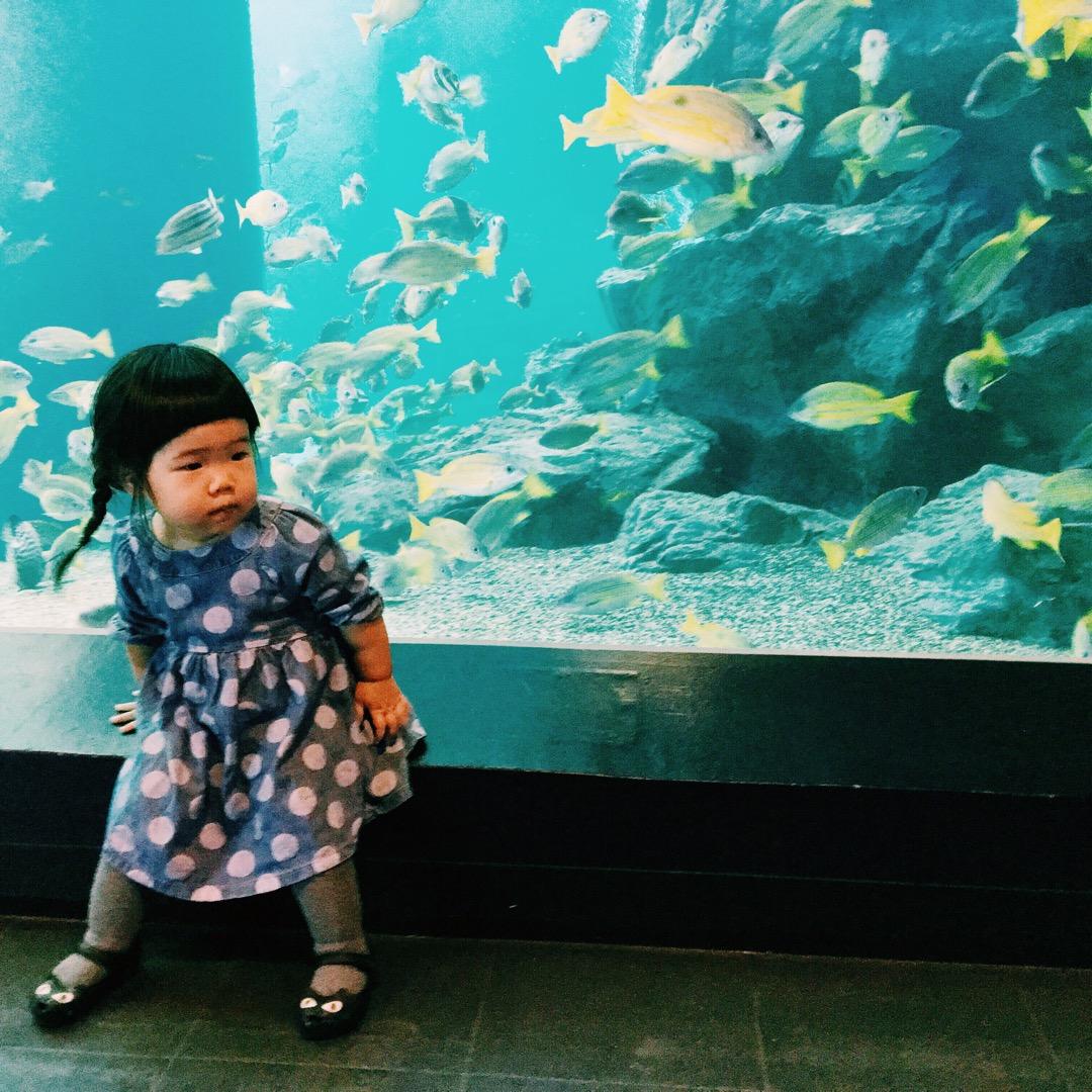 品川にあるアクアパークは東京に住んでるなら絶対年パスがおすすめです...