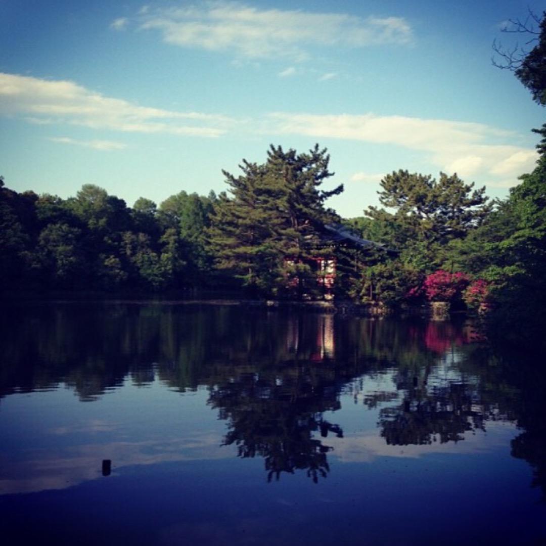 公園内の池の周りを散歩しました。 のどかで気分転換になります。 ボ...