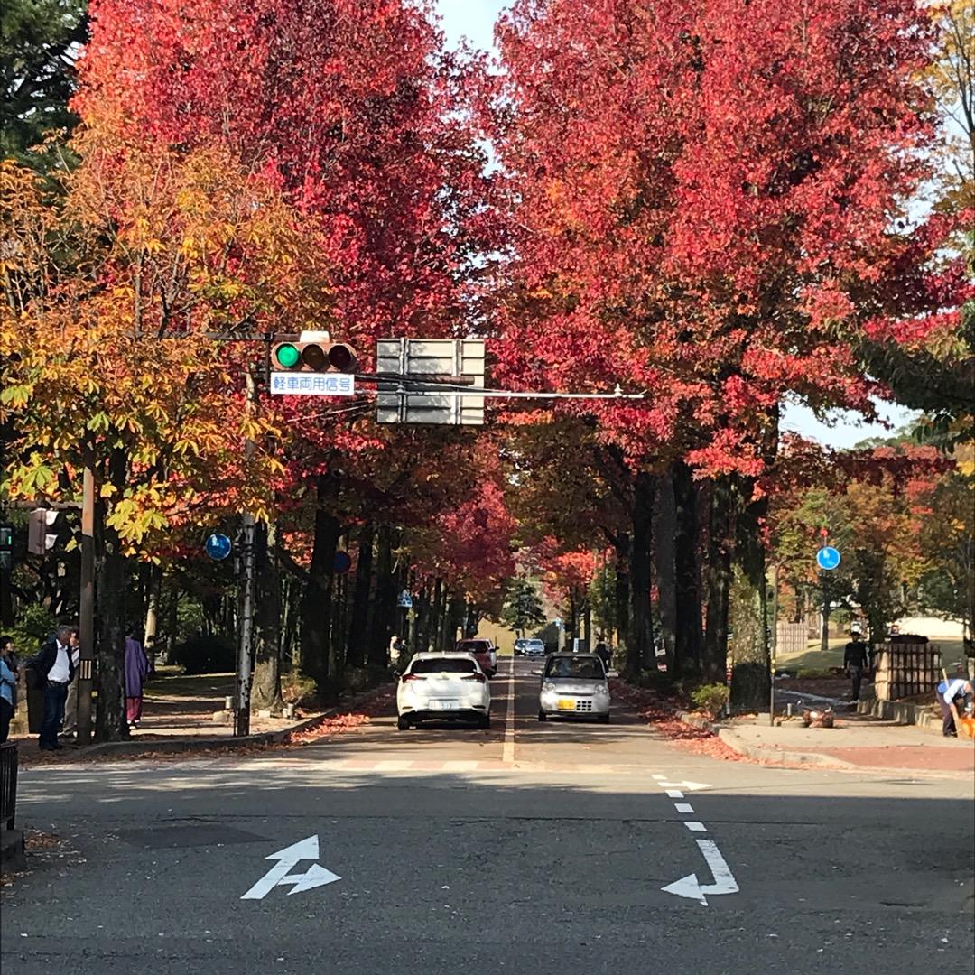#秋だね #しいのき迎賓館 #金沢市役所 #香林坊 #金沢市