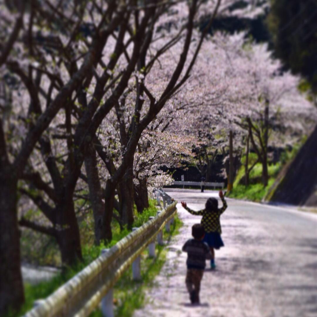 庭木ダム  桜が道沿いに咲いている場所です。 花見の方も多いです。...