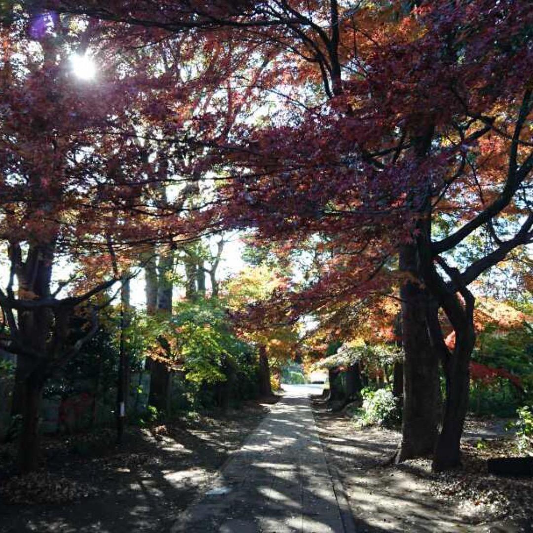 埼玉県川口市の興禅院の紅葉を見にちょっと立ち寄り 興禅院は、少し外...