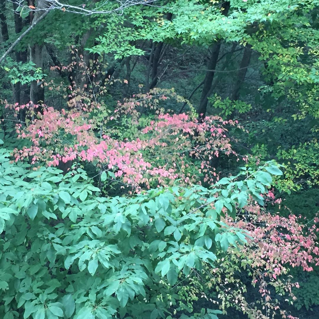 宮城県図書館から外を見たら緑の中に紅葉が!心がほっこりします。  ...