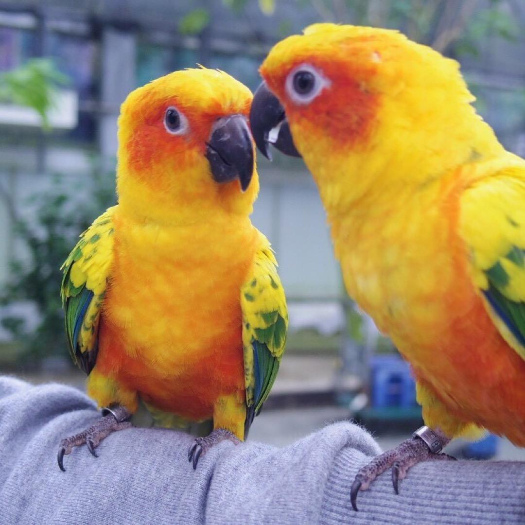 こんな鳥と触れ合えるとこ他にない😂😂 檻にも入ってなくてほぼ放し飼...