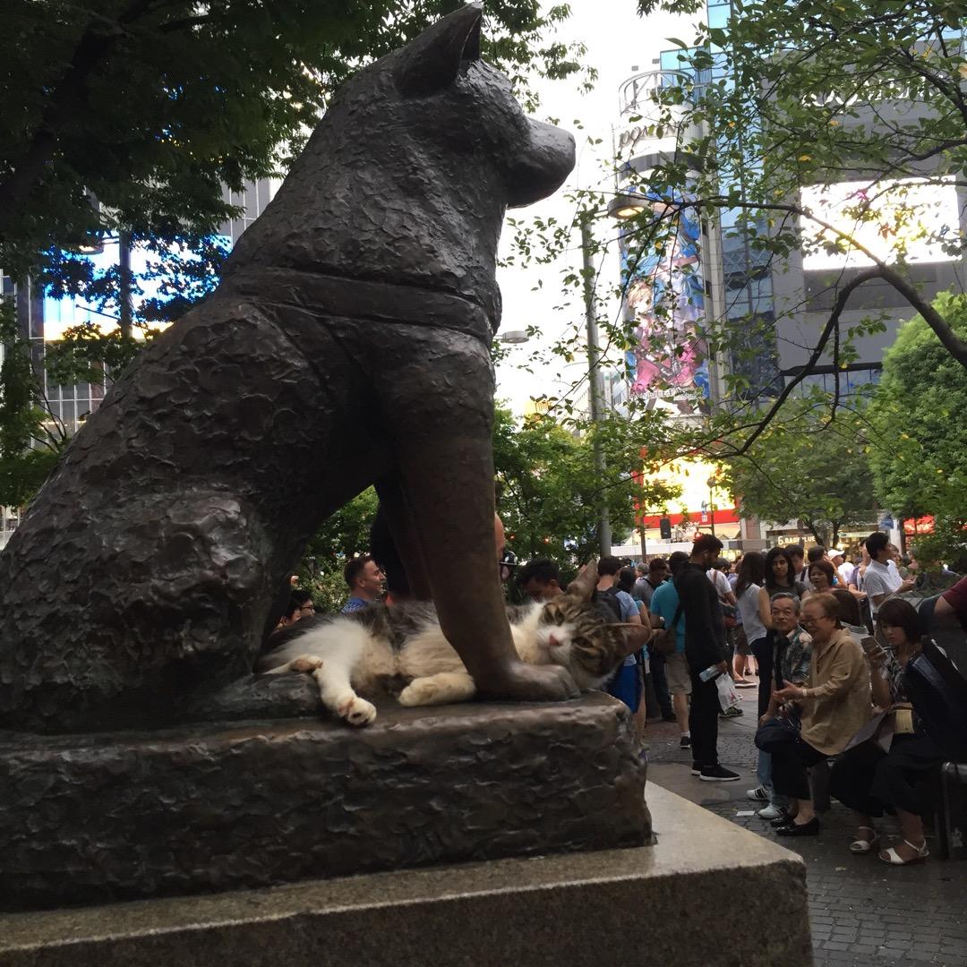 都内もド都心から一枚。  渋谷で待ち合わせ…といえば、多くの人が思...