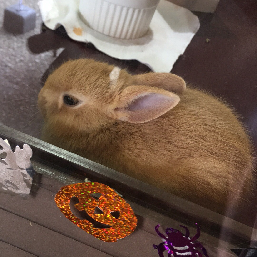 うさぎの里♡ 子ウサギ可愛すぎる♡ 入場無料で入れるよー✨
