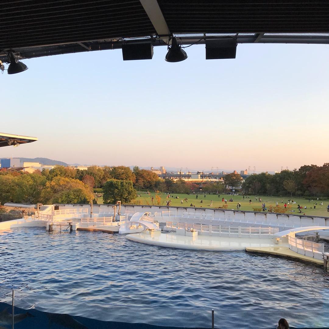京都水族館。夕方のイルカスタジアムからの風景。 スタジアムの席から...