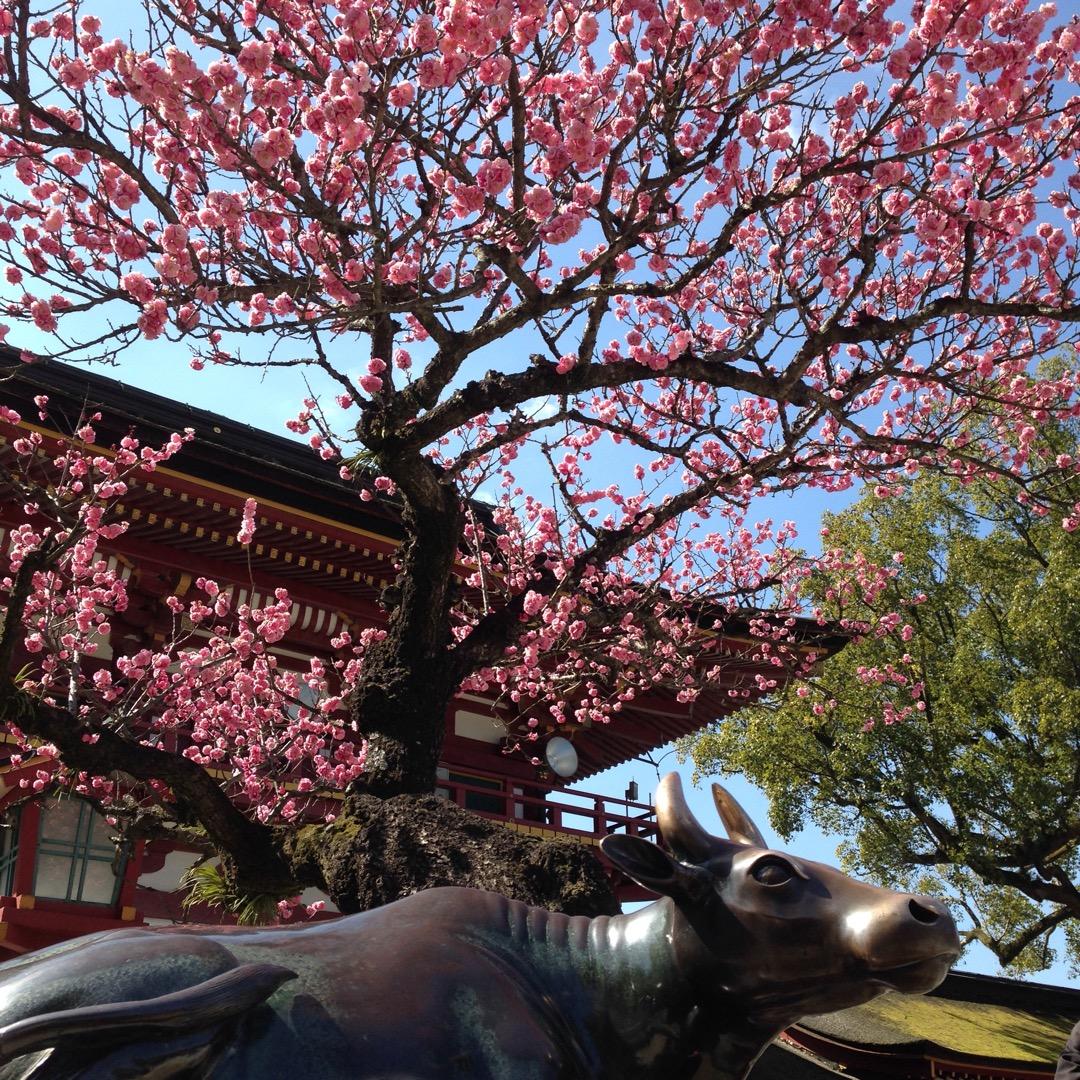 学問の神様で有名な太宰府天満宮。 梅の時期に行ったのですが、歩く道...