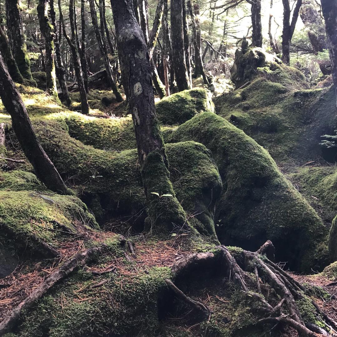 長野県北八ヶ岳の麓にきました。 ここには、JR東日本のCM撮影にも...