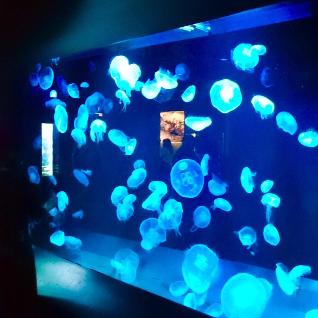 なんだか幻想的なくらげの水槽💠  #京都 #京都水族館 #水族館 ...