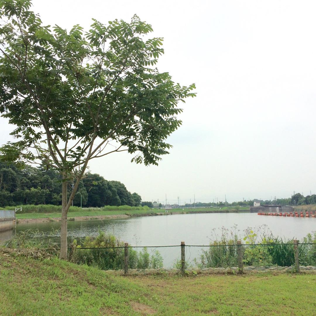 #広口池 ここは地元ではそこそこ有名なバス釣りスポット