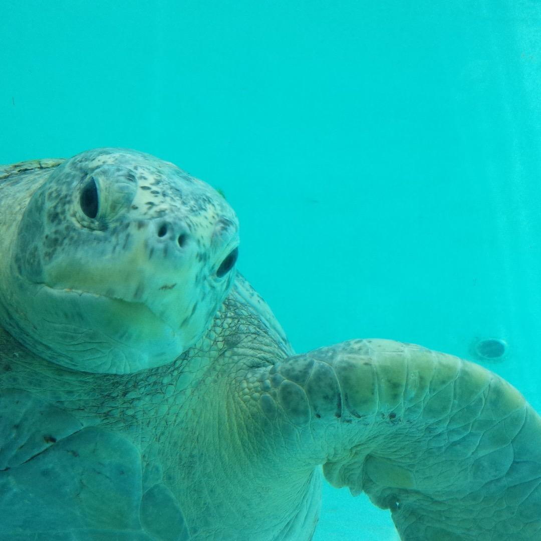 美ら海水族館にて。 好奇心旺盛なのか、サービス精神に溢れているのか...