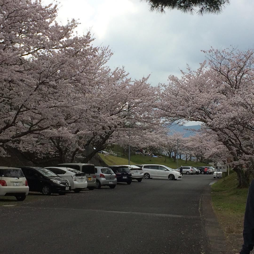 桜がとっても綺麗な国見台公園!人も多くなく、お花見にオススメのスポ...