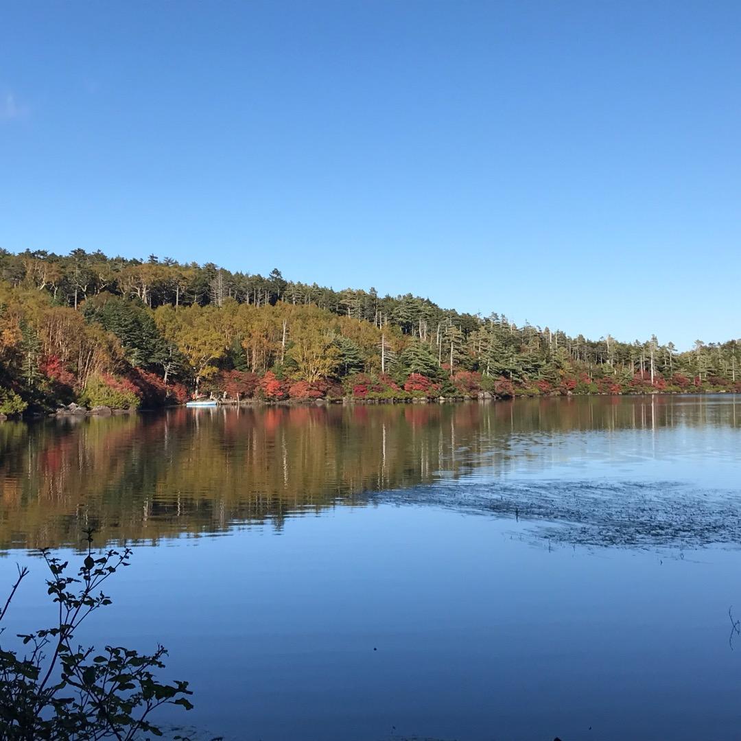 こちらは長野の佐久地方になる白駒池。山中には様々な苔もありマイナス...