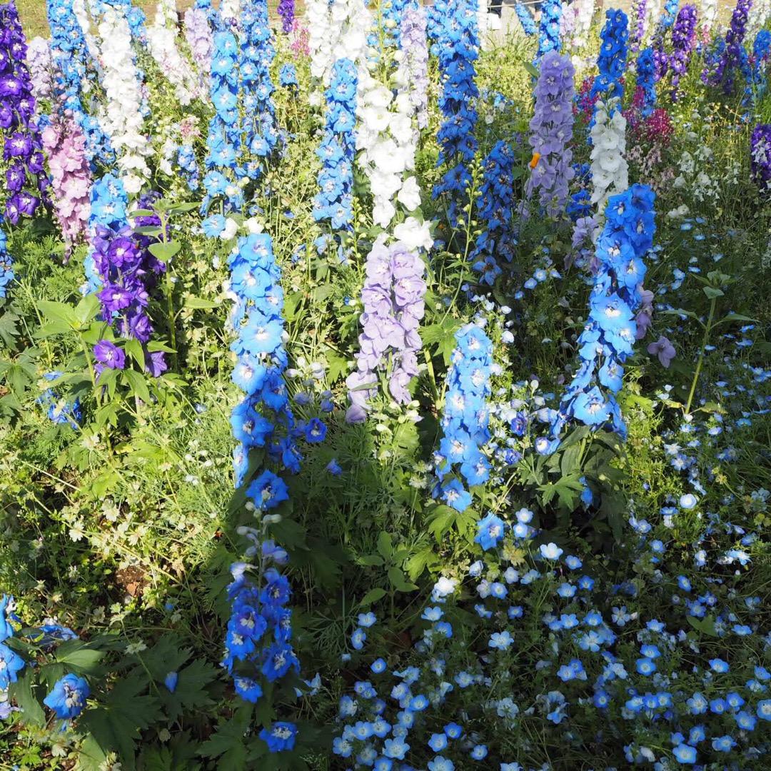 #昭和記念公園 で季節の花が見れます。一周するのにかなり時間がかか...