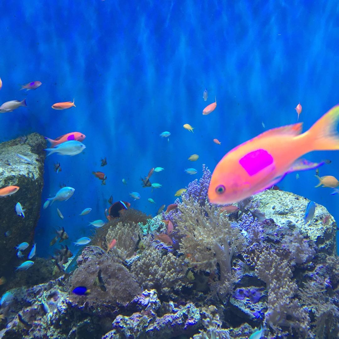 仙台うみの杜水族館! まだまだ混んでいますけど、やっぱり水族館好き...