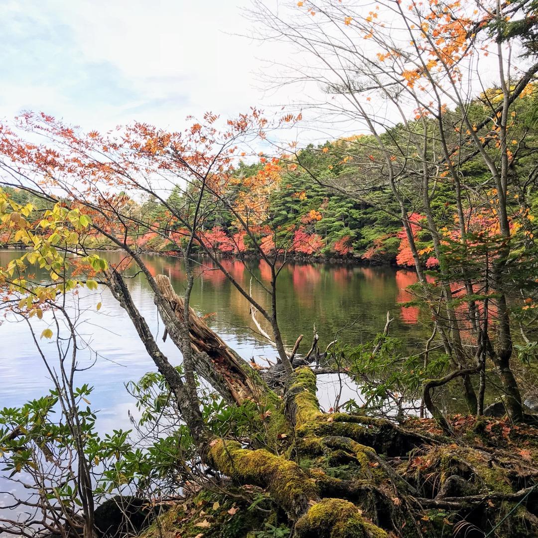 長野県北八ヶ岳の麓にきました。 ここは、白駒池。JR東日本のCM撮...