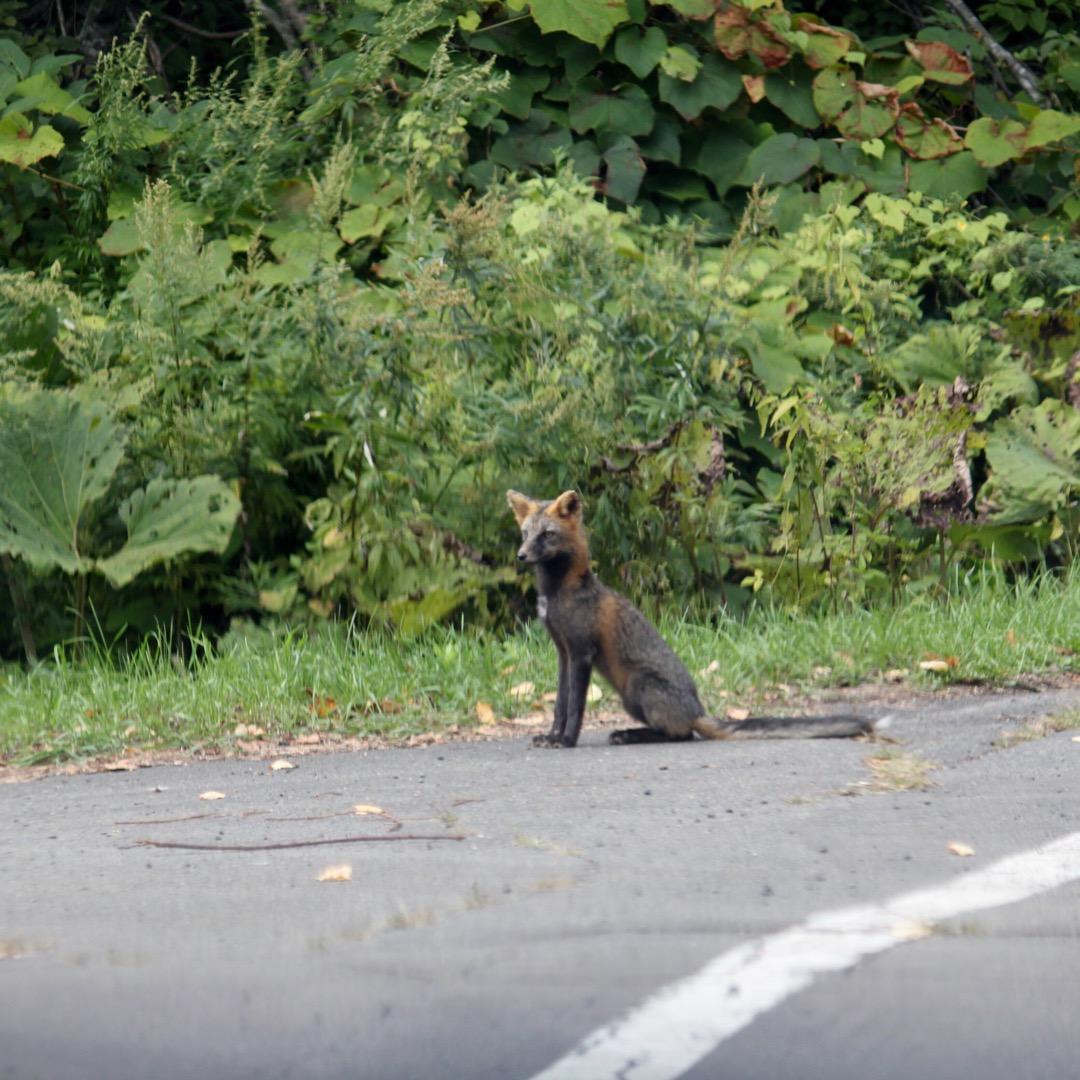 【北海道釧路市】野生動物に会いたい人必見。釧路湿原