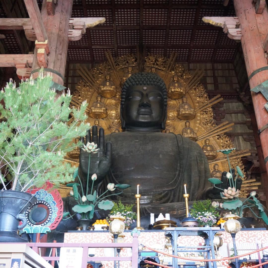 奈良の大仏様。全然興味がなかった修学旅行の時とはまた違う気持ちで見...